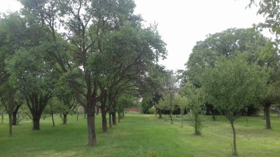 Prodej Pozemek 1174, TŘEBĚTICE