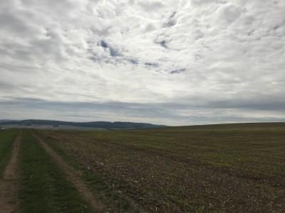 Prodej Pozemek, Trávník